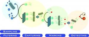 Legionella Testing Steps
